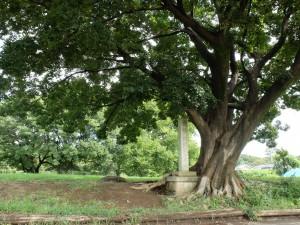 国分寺史跡